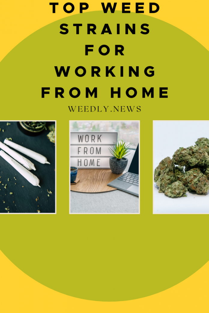 Top weed strains for working from home